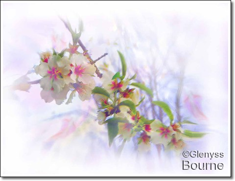 Almond Blossoms painting